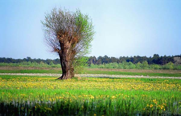 Wiosna nad Bugiem