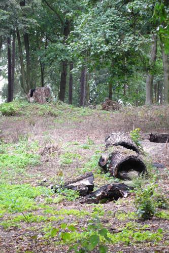 Wiele starych drzew nie dotrwało lepszych czasów