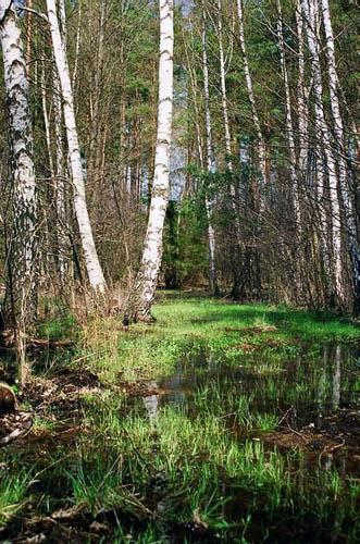 Wiosenna zieleń w Fideście
