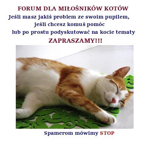 http://fotoforum.gazeta.pl/photo/7/gg/wb/qpz8/Uj3ynD0l6nkO1whevX.jpg