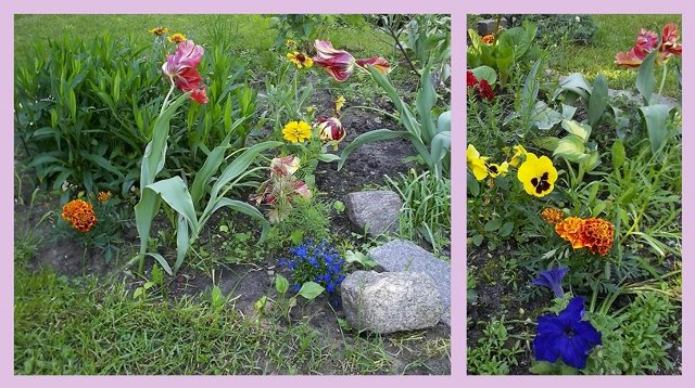 kwiaty-maj