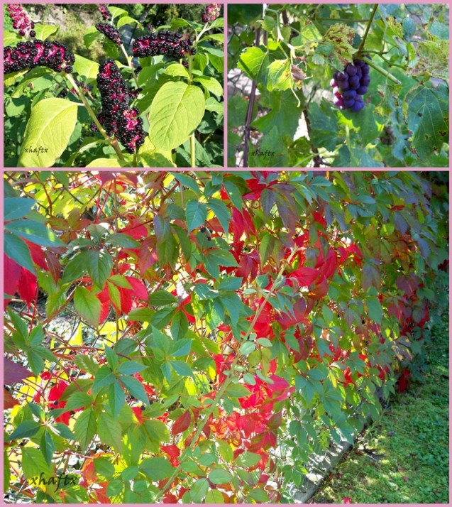 kolory jesieni1