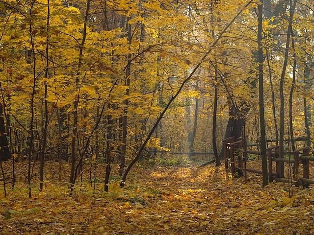 Lasek Bielański jesienią