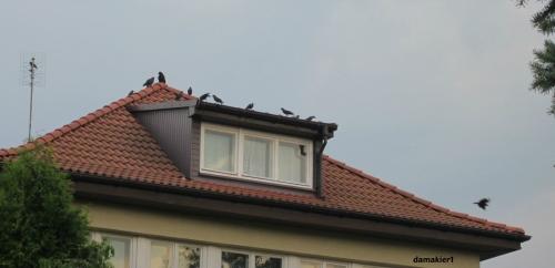 wrony