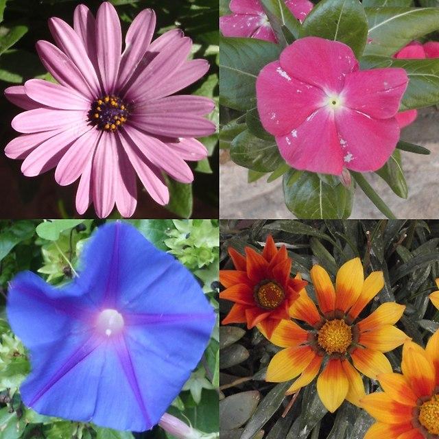 kwiaty roquebrune