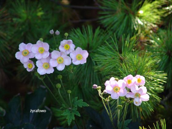 Ogrod Botaniczny 2011.08_18