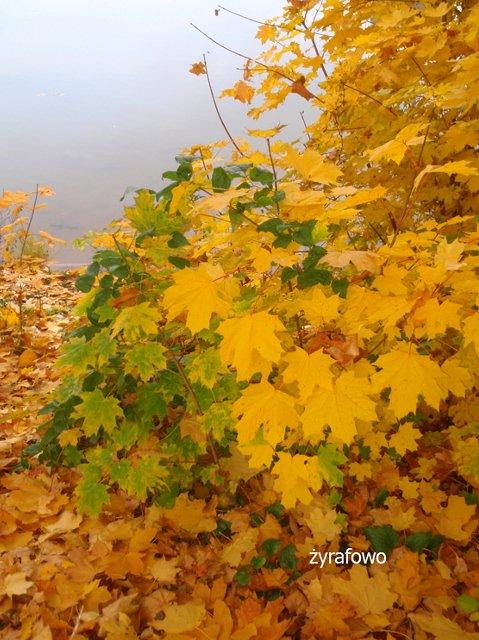 jesien 2011_36