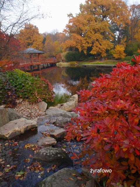 jesien 2011_32