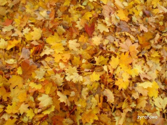 jesien 2014_37