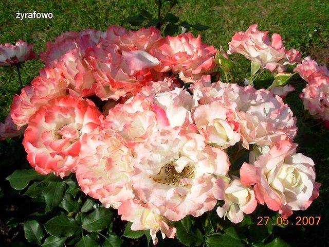 kwiaty_54