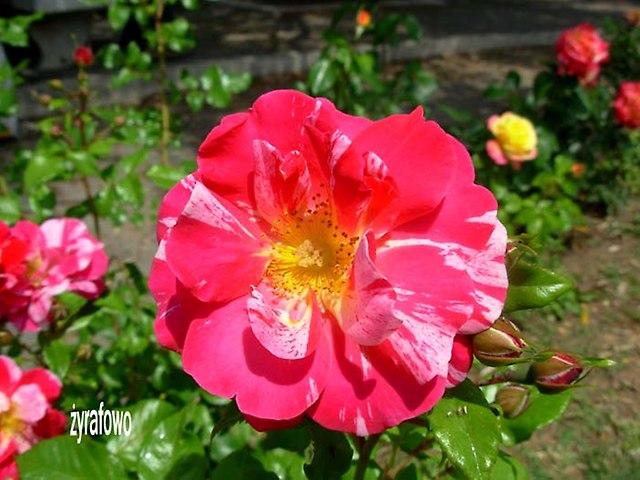 kwiaty_48
