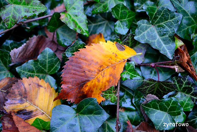 jesien 2014_28