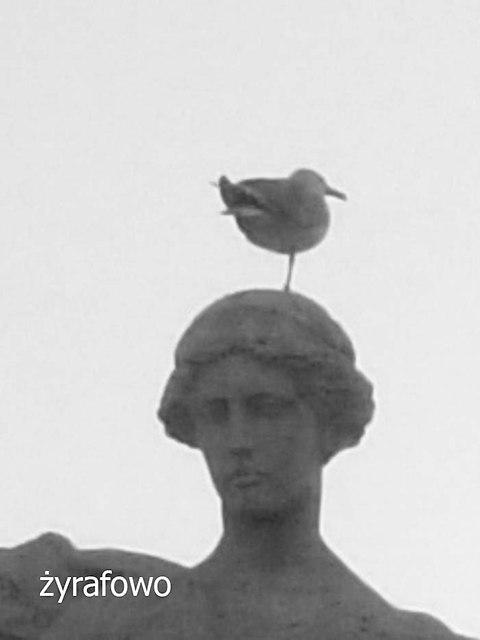 ptaki_03