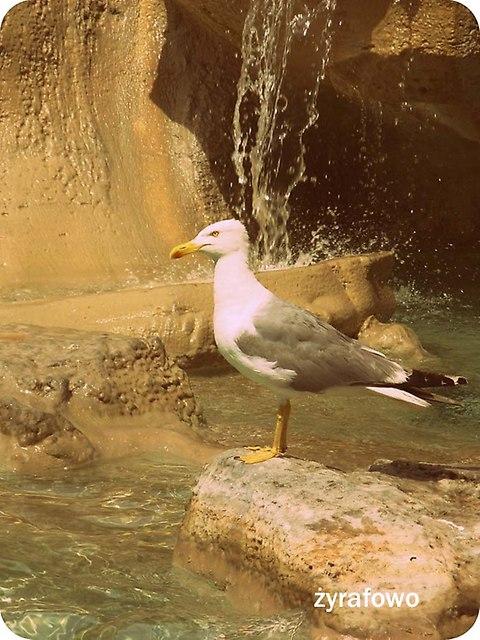 ptaki_44