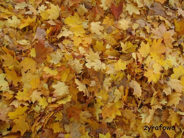 jesien 2014_17