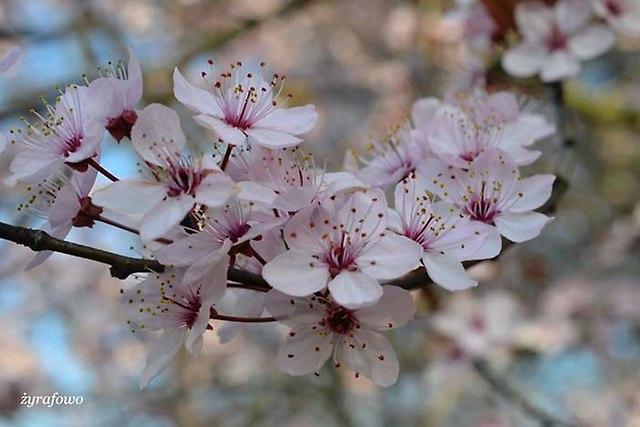 wiosna 2014_33