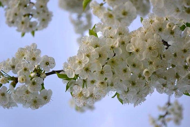 wiosna 2013_80
