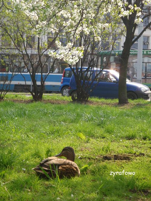wiosna 2010_12