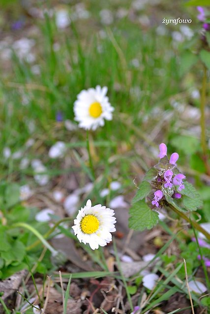 wiosna 2014_51