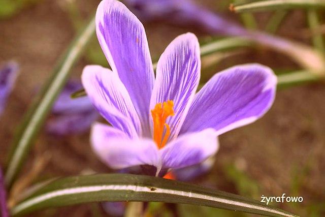 kwiaty 2015_02