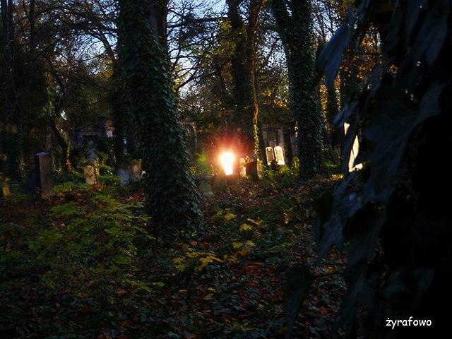 Cmentarz Zydowski_03