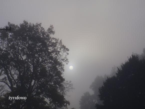 jesien 2011_62