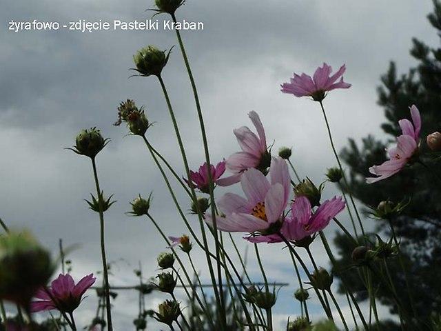 kwiaty 2012_18