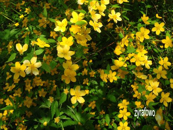wiosna 2011_82