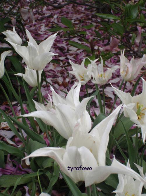 wiosna 2010_22