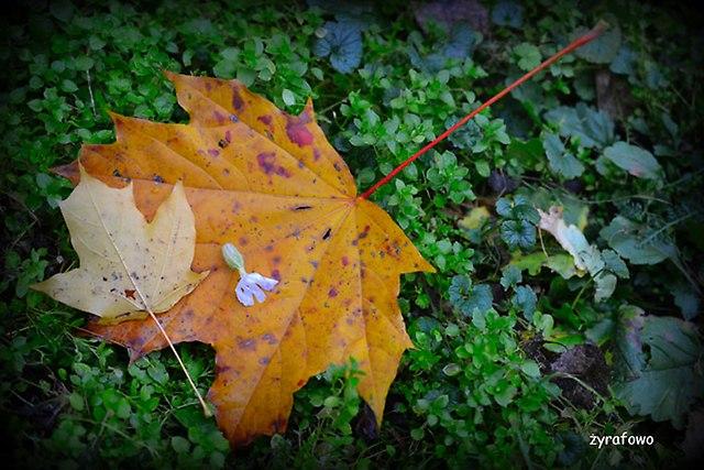 jesien 2014_32
