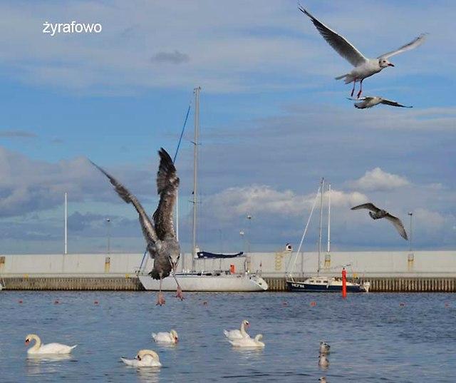 Gdynia_28