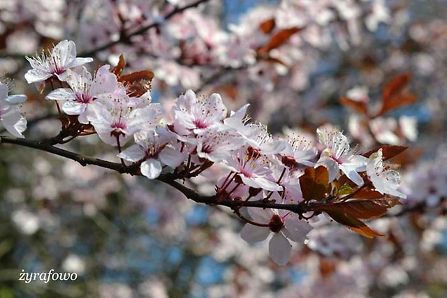 wiosna 2014_26