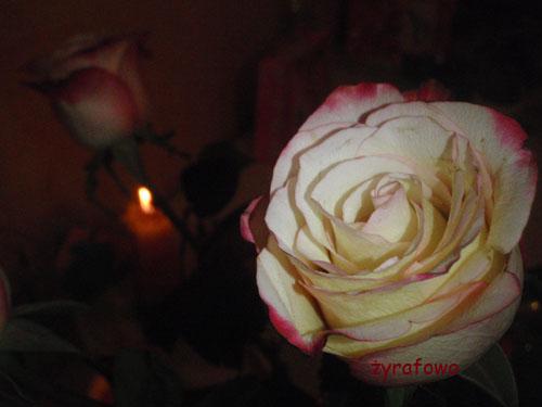urodziny 2010_04