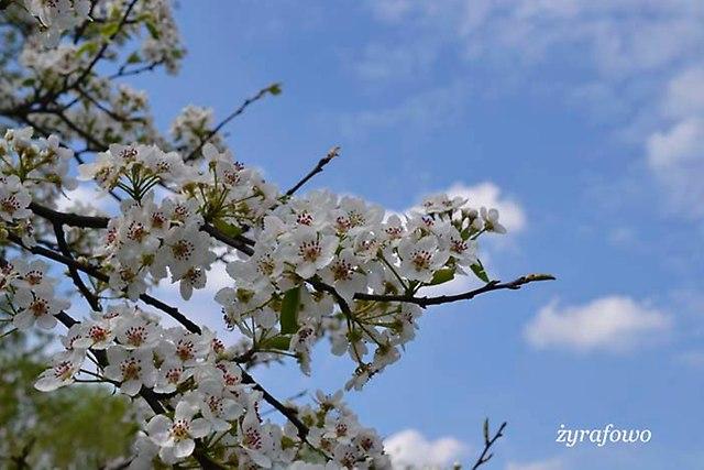 Wielkanoc 2014_25