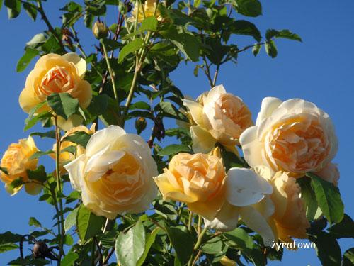 kwiaty_45