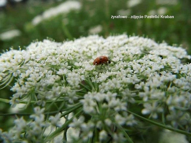 kwiaty 2012_01