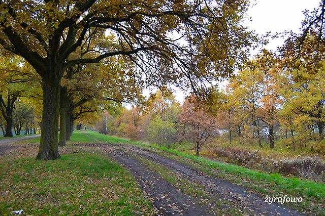 jesien 2012_244