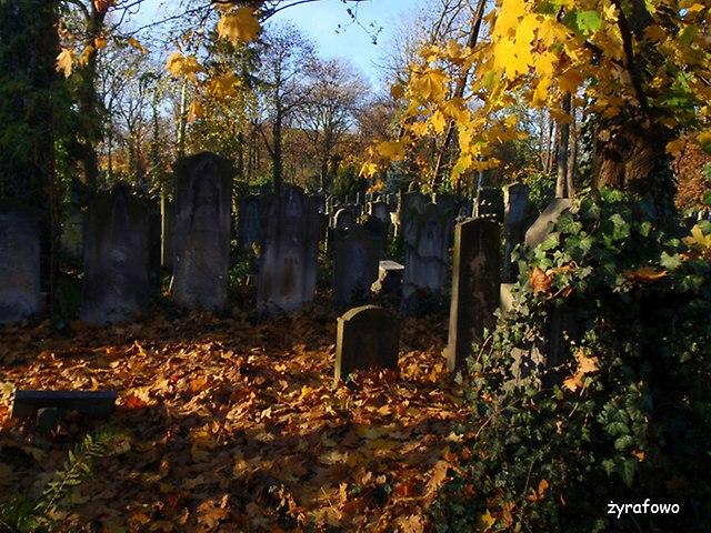 Cmentarz Zydowski_18