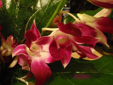 kwiatki 04