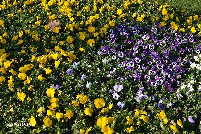 wiosna 2014_20