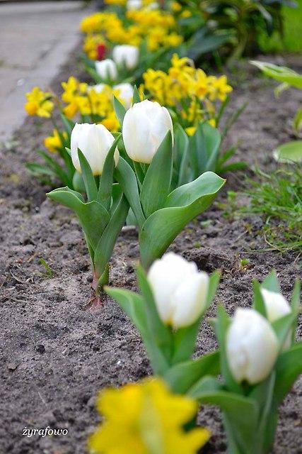 wiosna 2014_226