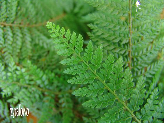 Ogrod Botaniczny 2011.08_07