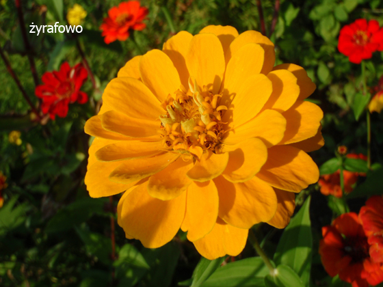 dzialka 2011_07