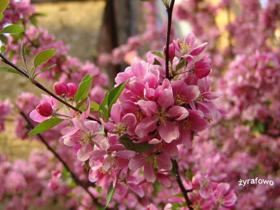 wiosna 2011_56