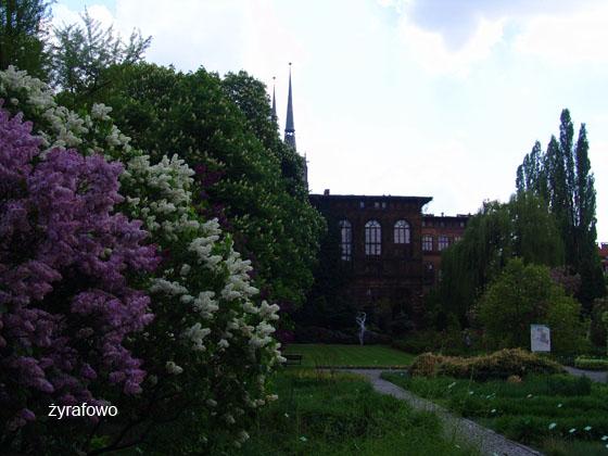 wiosna 2011_96