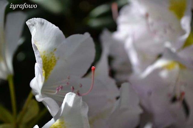 Ogrod Botaniczny_09