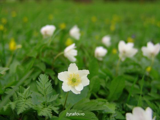 wiosna 2011_46