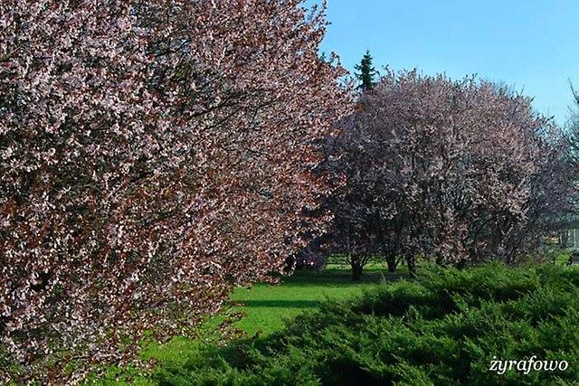 wiosna 2014_35