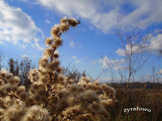jesien 2010_40