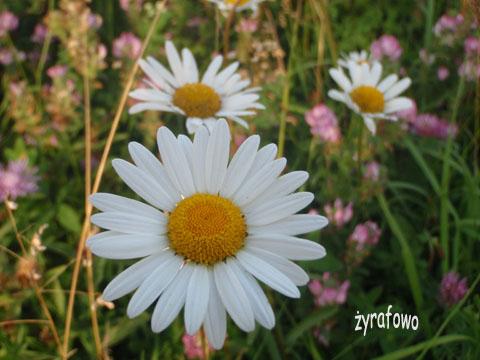 wakacyjne kwiatuszki